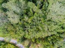 Vue aérienne d'une forêt Photo stock