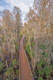 Vue aérienne d'une promenade par un marais de Cypress Image libre de droits