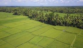 Vue aérienne de beau paysage renversant de gisement de riz de Bali et de ferme de palmier de jungle avec le volcan Agung à l'arri Images stock