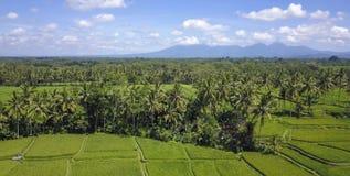 Vue aérienne de beau paysage renversant de gisement de riz de Bali et de ferme de palmier de jungle avec le volcan Agung à l'arri Image libre de droits