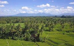 Vue aérienne de beau paysage renversant de gisement de riz de Bali et de ferme de palmier de jungle avec le volcan Agung à l'arri Photo libre de droits