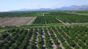 Vue aérienne de belle vallée de Neretva en Croatie du sud banque de vidéos
