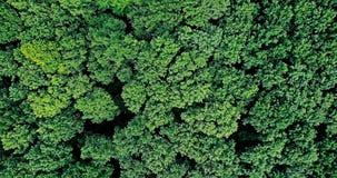 Vue aérienne de bourdon de Forest Trees Landscape Image stock