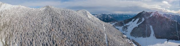 Vue aérienne de bourdon des bois couverts de neige après chutes de neige Alpes italiens Photos stock