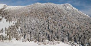 Vue aérienne de bourdon des bois couverts de neige après chutes de neige Alpes italiens Images stock