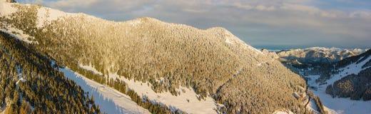 Vue aérienne de bourdon des bois couverts de neige après chutes de neige Alpes italiens Images libres de droits