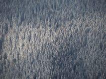 Vue aérienne de bourdon des bois couverts de neige après chutes de neige Alpes italiens Photographie stock libre de droits