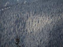 Vue aérienne de bourdon des bois couverts de neige après chutes de neige Alpes italiens Photo libre de droits