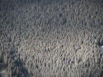 Vue aérienne de bourdon des bois couverts de neige après chutes de neige Alpes italiens Image libre de droits