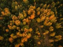 Vue aérienne de bourdon de forêt d'automne photos stock