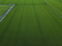 Vue aérienne de bourdon de gisement vert de riz avec le fond de nature de modèle de vert de paysage photo libre de droits