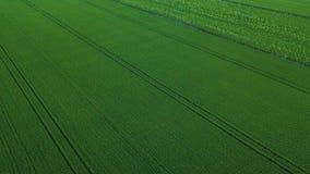 Vue aérienne de bourdon de gisement vert de riz avec le fond de nature de modèle de vert de paysage horizontal photo stock