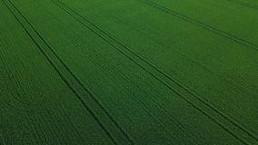 Vue aérienne de bourdon de gisement vert de riz avec le fond de nature de modèle de vert de paysage horizontal photos libres de droits