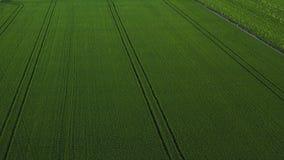 Vue aérienne de bourdon de gisement vert de riz avec le fond de nature de modèle de vert de paysage horizontal photo libre de droits