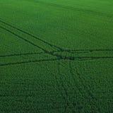 Vue aérienne de bourdon de gisement vert de riz avec le fond de nature de modèle de vert de paysage place image libre de droits