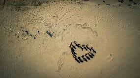 Vue aérienne de bourdon sur le groupe de personnes Photo libre de droits