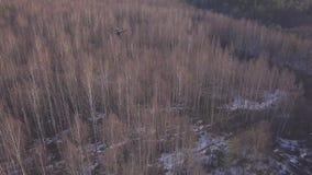 Vue aérienne de bourdon volant au-dessus des arbres et et tirant la vidéo du paysage de forêt d'hiver ou de printemps dans le jou clips vidéos
