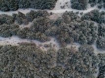 Vue aérienne de cèdre et de pins dans la neige Images libres de droits
