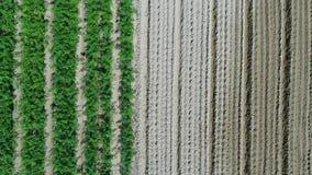 Vue aérienne de champ de plantation banque de vidéos