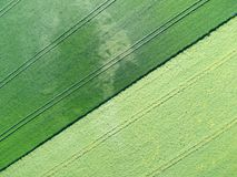 Vue aérienne de champ vert de grain Photo libre de droits