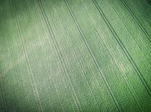 Vue aérienne de champ vert de grain Image stock