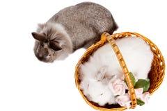 Vue aérienne de deux lapins d'animal familier Photographie stock libre de droits