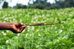 Vue aérienne de ferme de lotus photo libre de droits