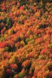 Vue aérienne de feuillage d'automne au Vermont. images libres de droits