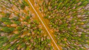 Vue aérienne de forêt au temps d'automne avec le temps beau Images libres de droits