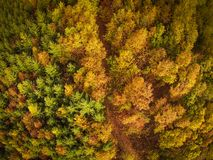 Vue aérienne de forêt d'automne images stock