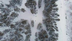 Vue aérienne de forêt d'hiver clips vidéos