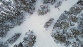 Vue aérienne de forêt d'hiver banque de vidéos