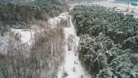 Vue aérienne de forêt neigeuse d'hiver banque de vidéos