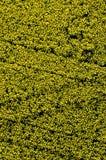 Vue aérienne de gisement de fleur jaune de graine de colza image stock