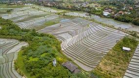 Vue aérienne de gisement de riz Images stock