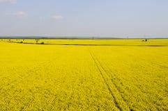 Vue aérienne de graine de colza jaune images stock