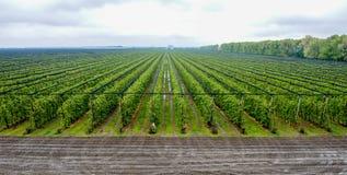 Vue aérienne de grand champ de pommiers Photographie stock libre de droits