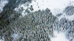 Vue aérienne de la forêt à l'hiver photo libre de droits