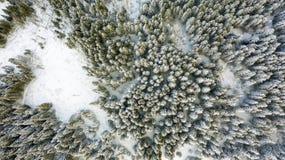 Vue aérienne de la forêt à l'hiver image stock