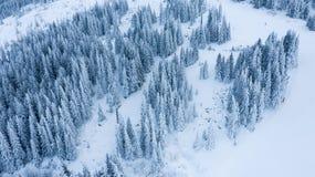 Vue aérienne de la forêt à l'hiver photographie stock