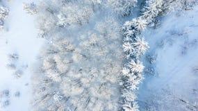 Vue aérienne de la forêt à l'hiver photos stock