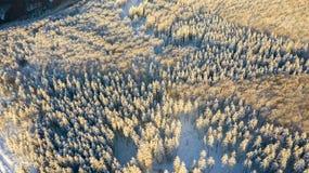 Vue aérienne de la forêt à l'hiver photographie stock libre de droits