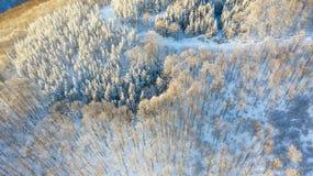 Vue aérienne de la forêt à l'hiver photo stock