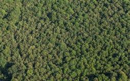 Vue aérienne de la forêt Photographie stock libre de droits