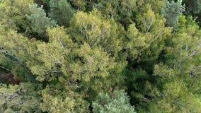 Vue aérienne de la forêt en Pologne banque de vidéos