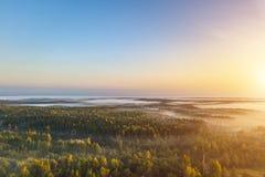 Vue aérienne de la forêt de matin dans le brouillard photo libre de droits