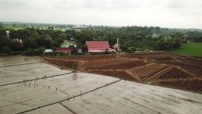 Vue aérienne de la vue supérieure de bourdon des gisements verts et de l'agriculteur de riz travaillant dans le domaine de riz de banque de vidéos