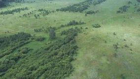 Vue aérienne de longueur de bourdon : Vol au-dessus des montagnes d'été avec des forêts, des prés et des collines dans la lumière clips vidéos