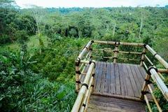 Vue aérienne de plantation de café dans Bali Images stock