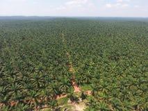 Vue aérienne de plantation de palmier à huile images stock